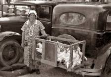 farm woman w truck